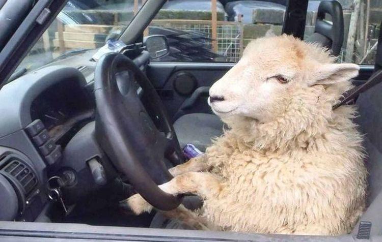 Автоексперти вказали на шкідливі автомобільні звички водіїв